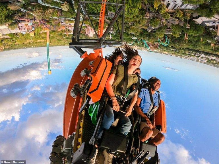 Tigris - Busch Gardens